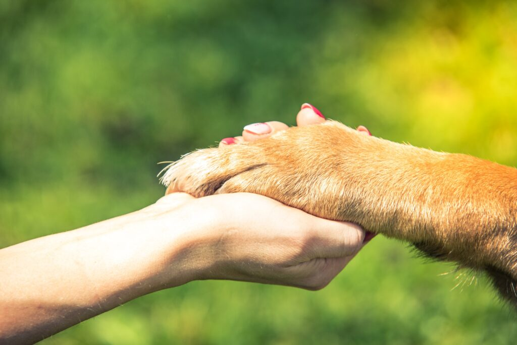 hand holding dog paw, relationship and love concept